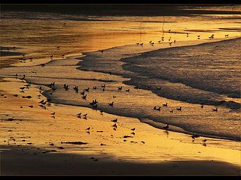 Sea, Sand and Seagulls.jpg