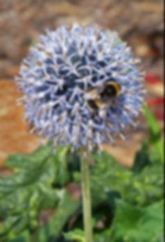Allium and Bumble Bee DPI.jpg