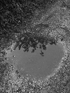 14  muddy puddle.jpg