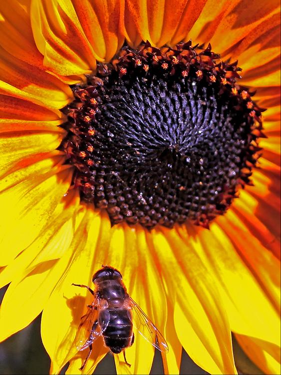 03  Gardeners friend.jpg