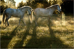 Stallions out early.jpg