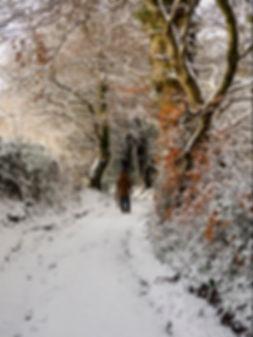 A Walk in the Snow.jpg