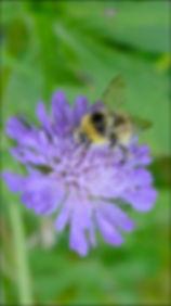 BUMBLE BEE, STRANG.jpg