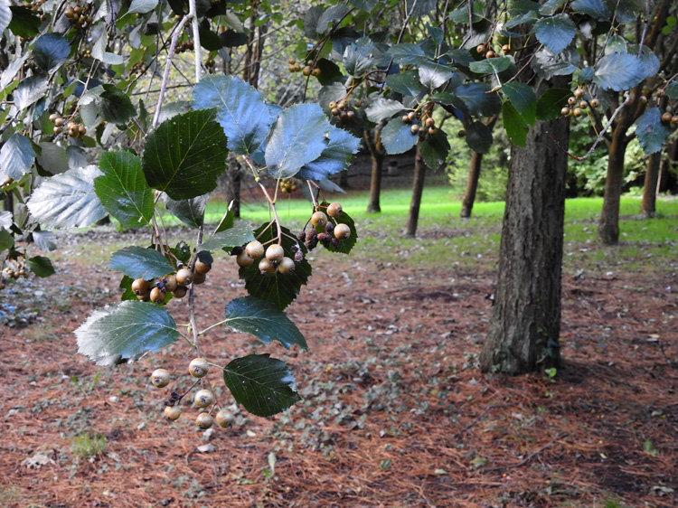 Tynwald arboretum.jpg