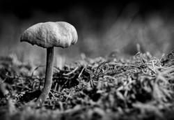 On the Forest Floor.jpg