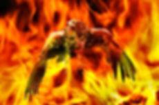 Legend of the Firebird.jpg