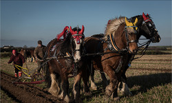 Ploughing at Poortown