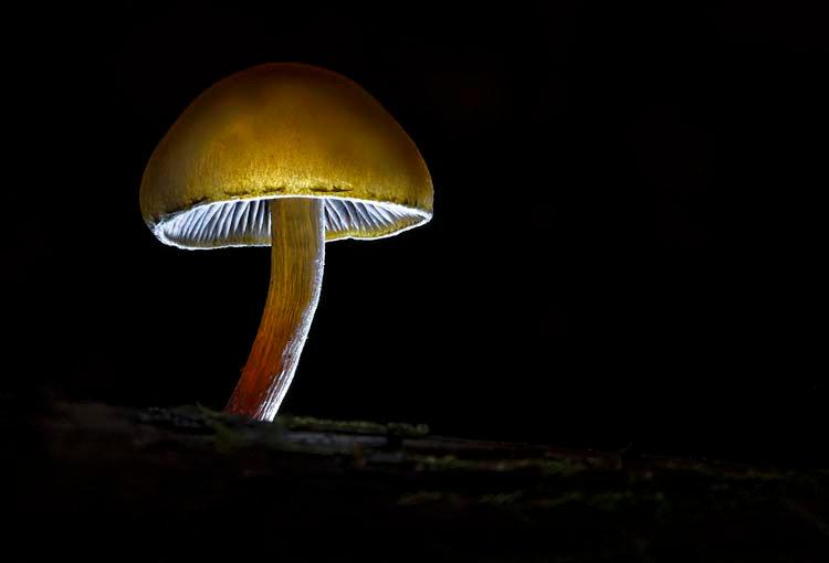 A Natural Lantern.jpg