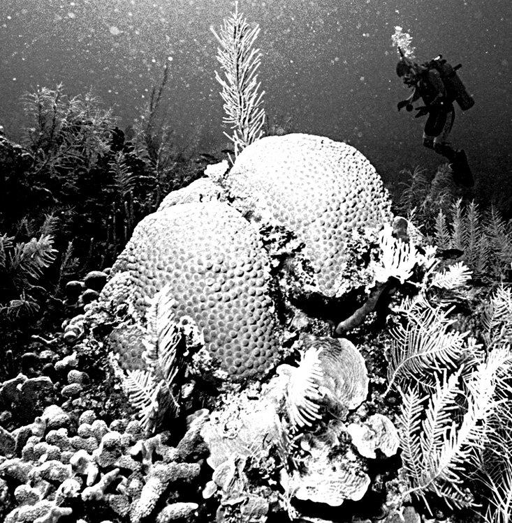 Capt Nemo.jpg