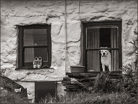 Window warrior.jpg