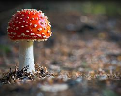 fairytale fungus.jpg