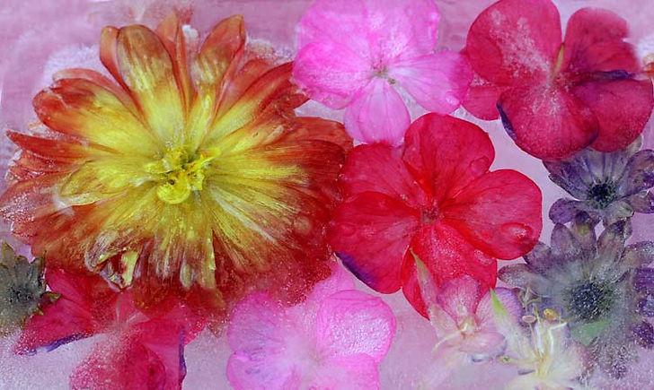 Frozen_Blooms.jpg