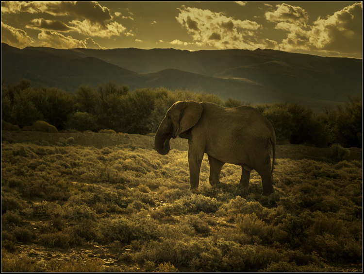 35 Elephant at Dusk.jpg