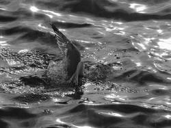 Buoyancy Issues By Tony Faragher