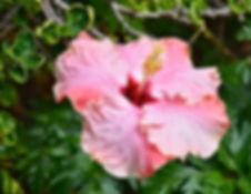 Lovely in Pink.jpg