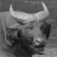Congo Buffalo DPI.jpg