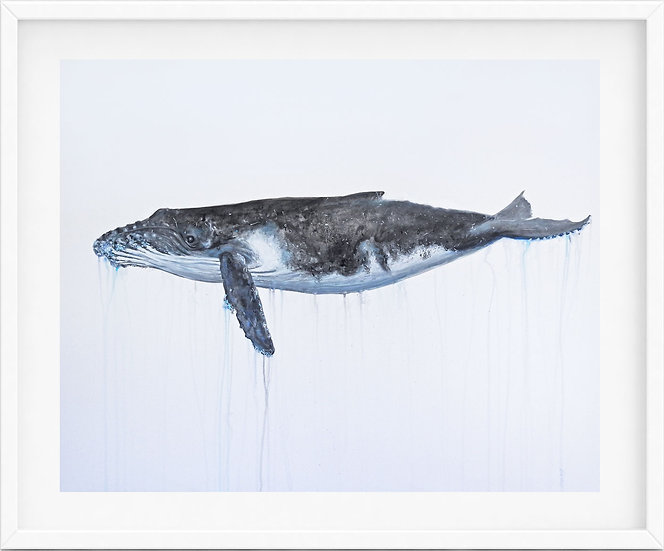 Humpback Whale - limited edition print 3/100
