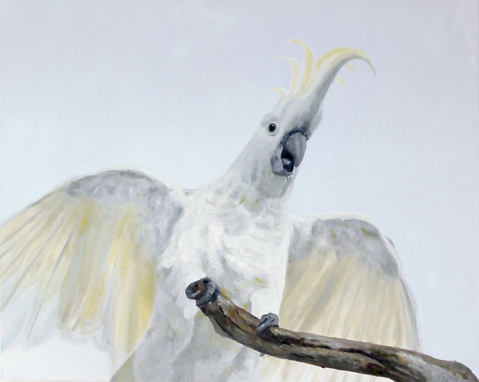 Sulfur-crested Cockatoo Painting - Framed