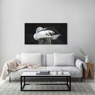 australian pelican painting on wall.jpg