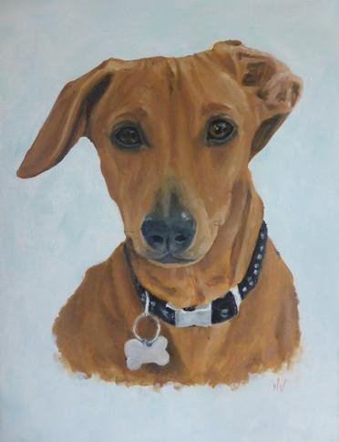 dog-portraits-sausage-dog.jpg