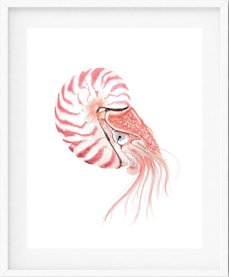 Nautilus - limited edition print 7/100