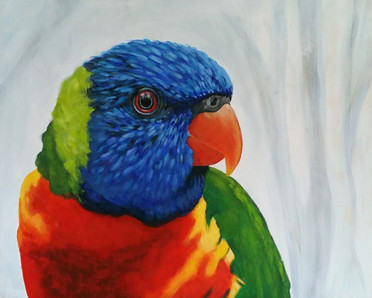 rainbow-lorikeet-painting-naomi-veitch-c
