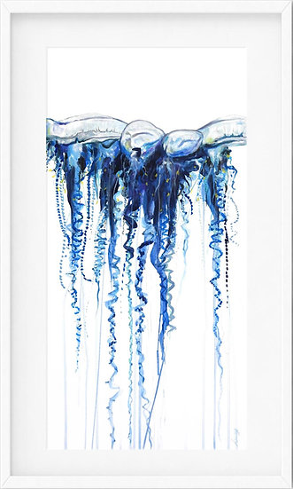 Bluebottle Jellyfish - limited edition print 1/100