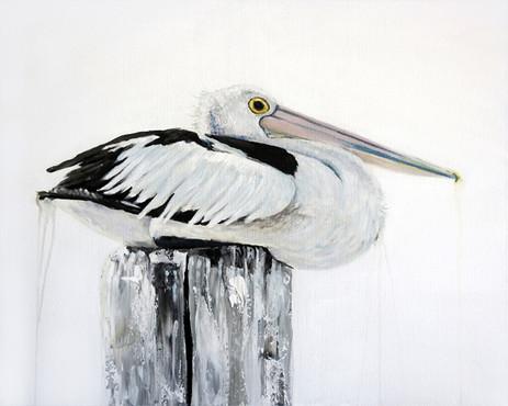 australian pelican painting sold