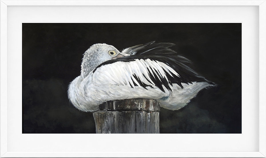 Australian Pelican - limited edition print 1/100