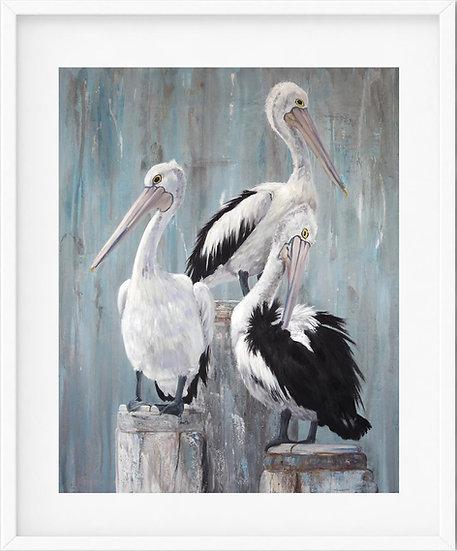 Australian Pelican - limited edition print 5/100