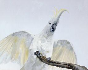 cockatoo-australian-bird-art- painting-n