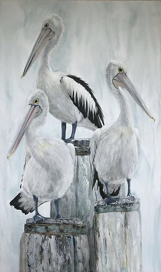 Australian Pelican Painting