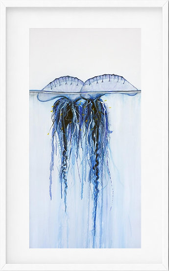 Bluebottle Jellyfish - limited edition print 1/100