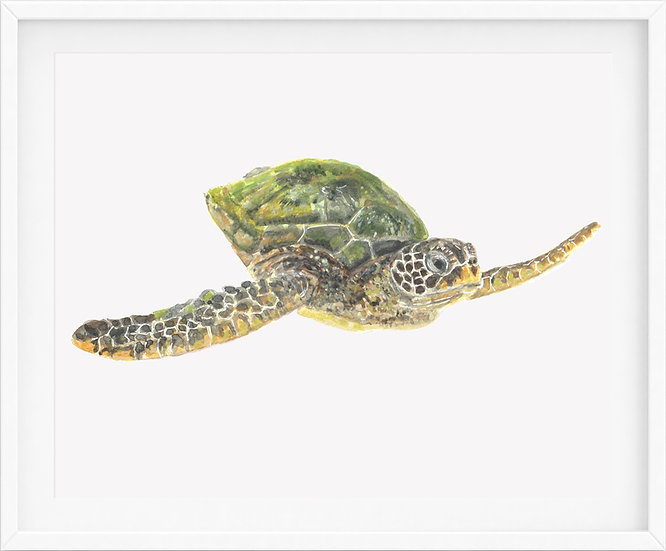 Sea Turtle - limited edition print 1/100