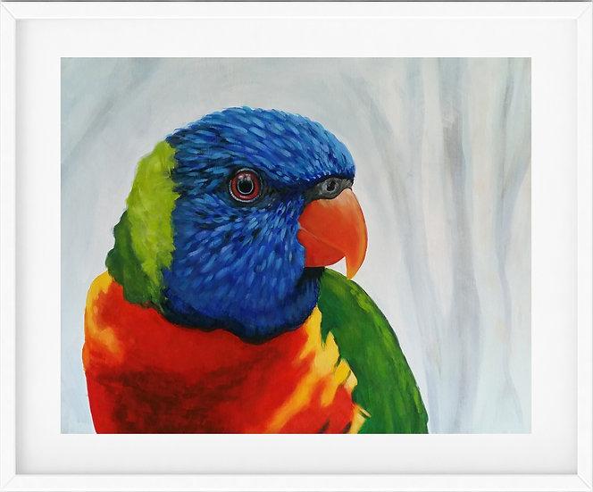 Rainbow Lorikeet - limited edition print 4/100