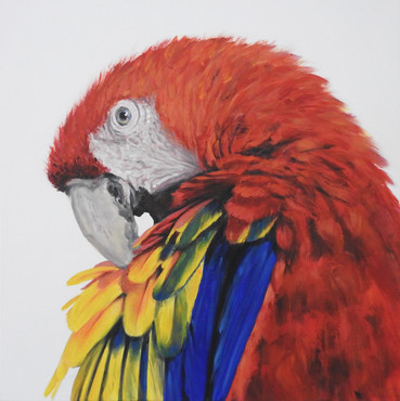 Scarlet macaw Painting | bird art | Naomi Veitch