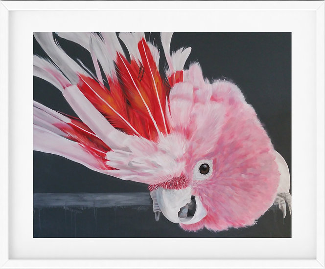 Major Mitchell's Cockatoo - limited edition print 3/100