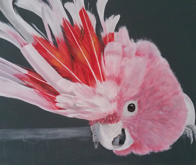 Major Mitchell's Cockatoo Painting