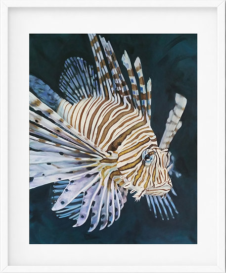 Lionfish - limited edition print 8/100