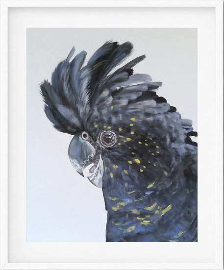 Red Tailed Black Cockatoo - limited edition print 6/100