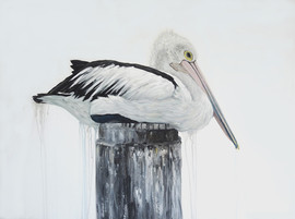 dripping pelican print by naomi veitch.j