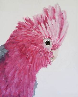 Painting of a galah by Naomi Veitch