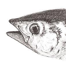 southern-bluefin-tuna-ink-drawing.jpg