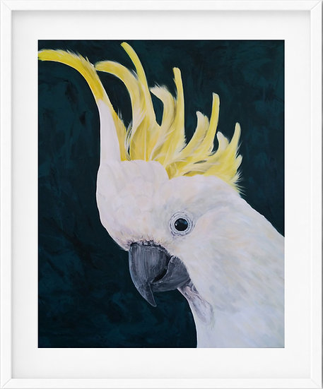 Sulfur-crested Cockatoo - limited edition print 5/100