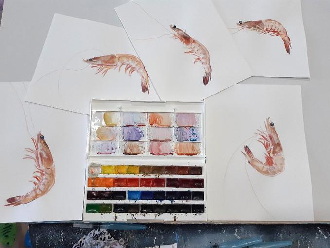Watercolour prawn paintings.jpg