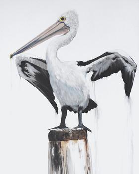 drip dry pelican painting by Australian