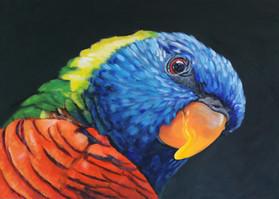 rainbow-lorikeet-print-5x7-sassy-austral