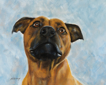 dog-portrait-staffy.jpg
