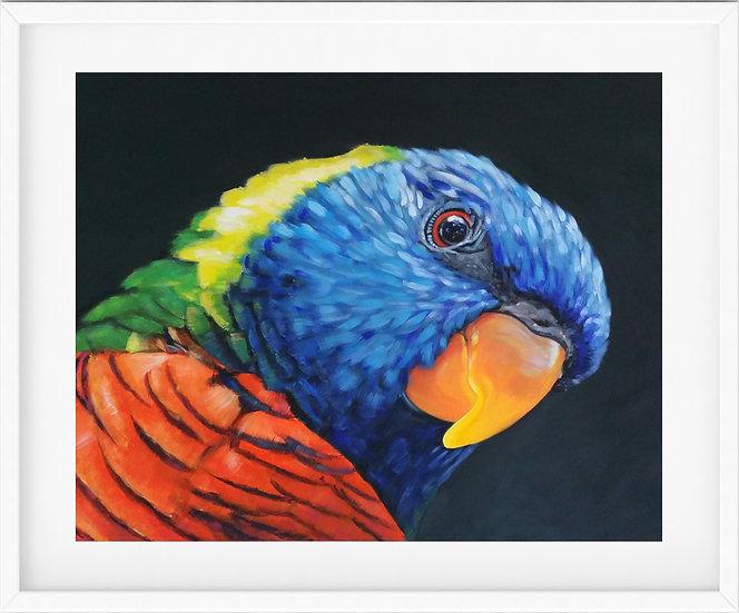 Rainbow Lorikeet - limited edition print 5/100