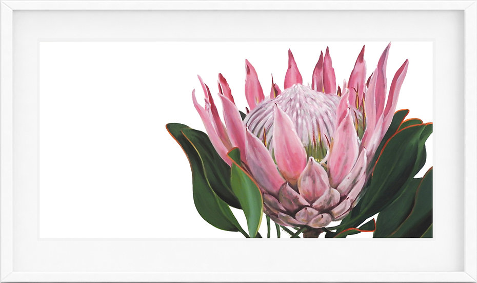 King Protea - limited edition print 1/100